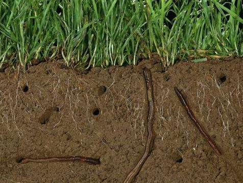 蚯蚓粪有机肥