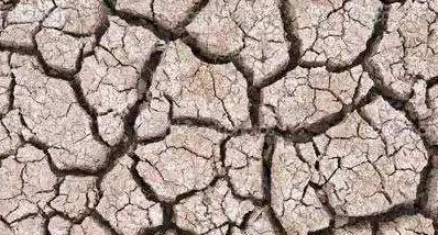 什么是肥沃的土壤(如何改善)