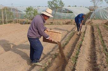 有机肥改良土壤